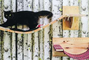 gatificacion-kattos-veterinaria-especializada-en-gatos-bogota-servicios