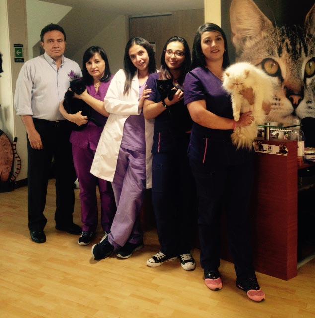 kattos-veterinaria-para-gatos