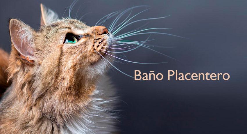 kattos-servicio-grooming-bano-gatos