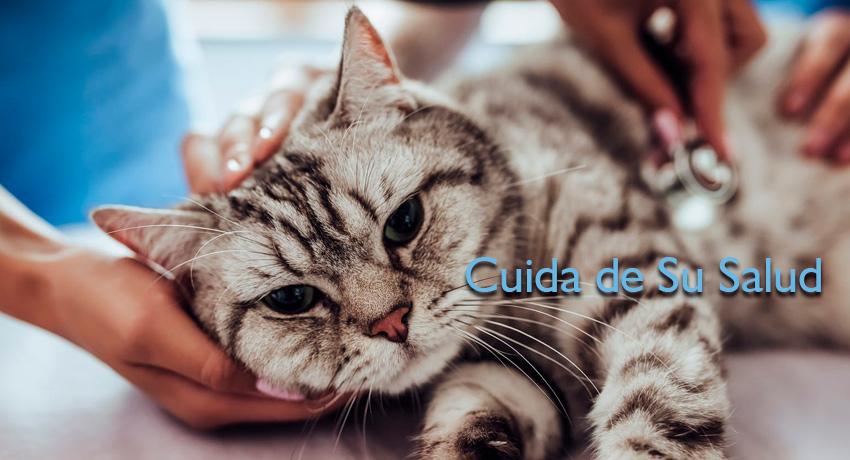 kattos-servicio-veterinario-gatos